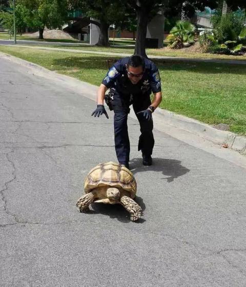[عکس: Turtle.jpg]